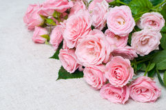 Wet pink roses on a gray linen fabric Royalty Free Stock Images