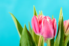 Wet Pink Tulip Flowers In Vase On Table Stock Photography