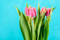 Wet Pink Tulip Flowers In Vase On Table Stock Image