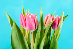 Wet Pink Tulip Flowers In Vase On Table Royalty Free Stock Photography
