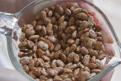 Wet Pinto Beans Close Up Royalty Free Stock Image