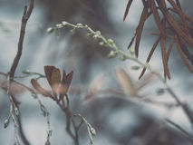 Wet plant branches in winter forest - retro vintage effect Royalty Free Stock Photography