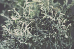 Wet plant branches in winter forest - retro vintage effect Royalty Free Stock Photos