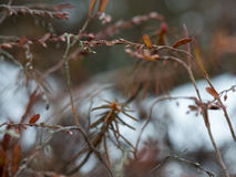 Wet plant branches in winter forest Royalty Free Stock Image