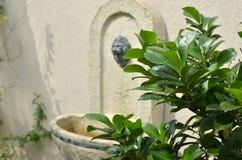 Wet Plant and Garden Faucet Stock Photos