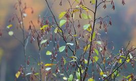 Wet plant with leave and flowers royalty free stock photography