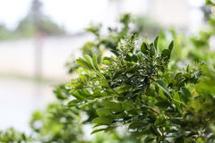Wet plant in rainy day Stock Photo