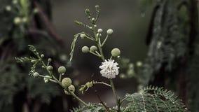 Wet plants. Rainy days wet flowers and fruits nature Stock Photo