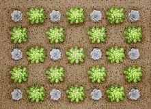 Wet plants on a soil background after the rain. Abstract backgro Stock Image