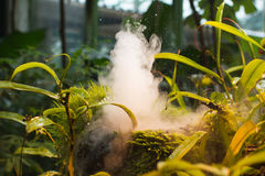 Wet plants and steam in tropical greenhouse Stock Images
