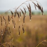 Wet plants on a wild field Stock Photo