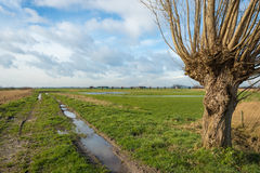 Wet polder landscape on a cloudy winter day Stock Image