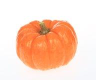 Wet Pumpkin Stock Images