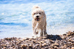 Wet puppy dog on the beach Stock Images