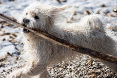 Wet puppy dog on the beach Royalty Free Stock Images