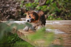 A wet puppy Stock Image