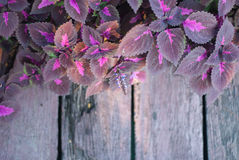 Wet purple leaf along the wood stair Stock Photos