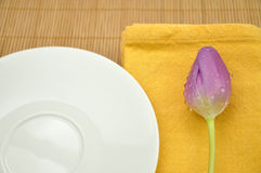 Wet Purple Tulip and a Plate Royalty Free Stock Photos