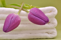 Wet Purple Tulips on Diapers Royalty Free Stock Image