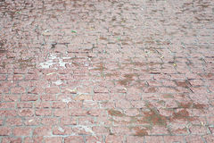 Wet with rain paving stone texture Stock Photography
