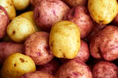 Wet raw potatoes Royalty Free Stock Photo