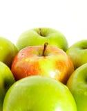 Wet red apple between green apples Stock Photos