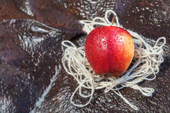 Wet red apple Royalty Free Stock Photos