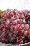 Wet red grapes Stock Photography
