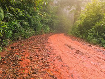 Wet red gravel path full of dried brown Autumn leaves leading to. Unknown in the tropical forest with mist fog, Thailand Stock Images