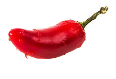 Wet RED hot chilli pepper. Isolated Royalty Free Stock Photos