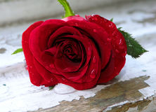 Wet red rose. Red rose with drops of water on the petals, situated on an old window frame Royalty Free Stock Image