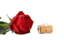 Wet red rose and a cork. On white background Royalty Free Stock Image