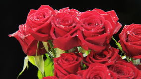 Wet Red Roses Rotating stock footage