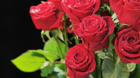 Wet Red Roses Rotating stock video