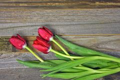 Wet red tulips on wood Stock Photo