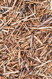 Wet reed straw background Stock Photo
