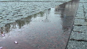 Wet reflective pavement in rain stock video footage