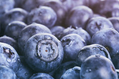Wet ripe blueberries for background Royalty Free Stock Image