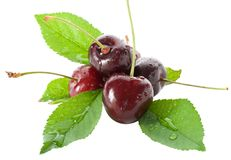 Wet ripe cherries with leaves Royalty Free Stock Image