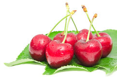Wet ripe cherry berry fruits with water droplets Stock Photography
