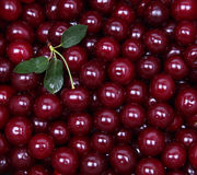 Wet ripe red cherries as background Royalty Free Stock Images