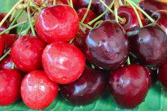Wet ripe wild cherries and red dark sweet cherries Royalty Free Stock Photo