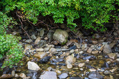 Wet river rocks and green plants. Royalty Free Stock Photography