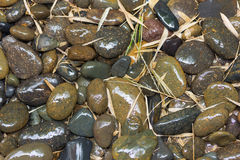 Wet river stones and bamboo leaves. Royalty Free Stock Photo