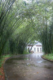 Wet road in bamboo forest Royalty Free Stock Photography