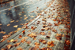 Wet road and fallen leaves royalty free stock photos