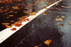 Wet road and fallen leaves. Horizontal color image of a wet road covered with brown and yellow leaves on an autumn rainy day Royalty Free Stock Photography