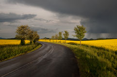 Wet road in the field after storm Royalty Free Stock Photo