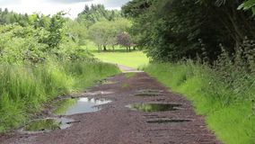 Wet road in the forest, summer time, Scotland, HD footage. Wet road in the forest in the summer time, Scotland, HD footage stock footage