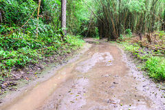 Wet road in rainforest.  Royalty Free Stock Image